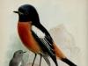 11_Ptichki