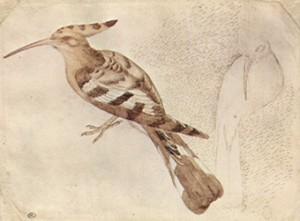 Рисунки птиц, изображения птиц, рисунки старых мастеров, рисунки для батик