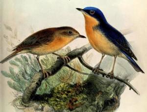 батик, рисунки для батика, рисунки для рукоделия, рисунки птиц